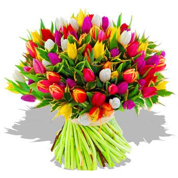 Verse gemengde tulpen van buiten elsbroekerwei for Bouquet de fleurs hd
